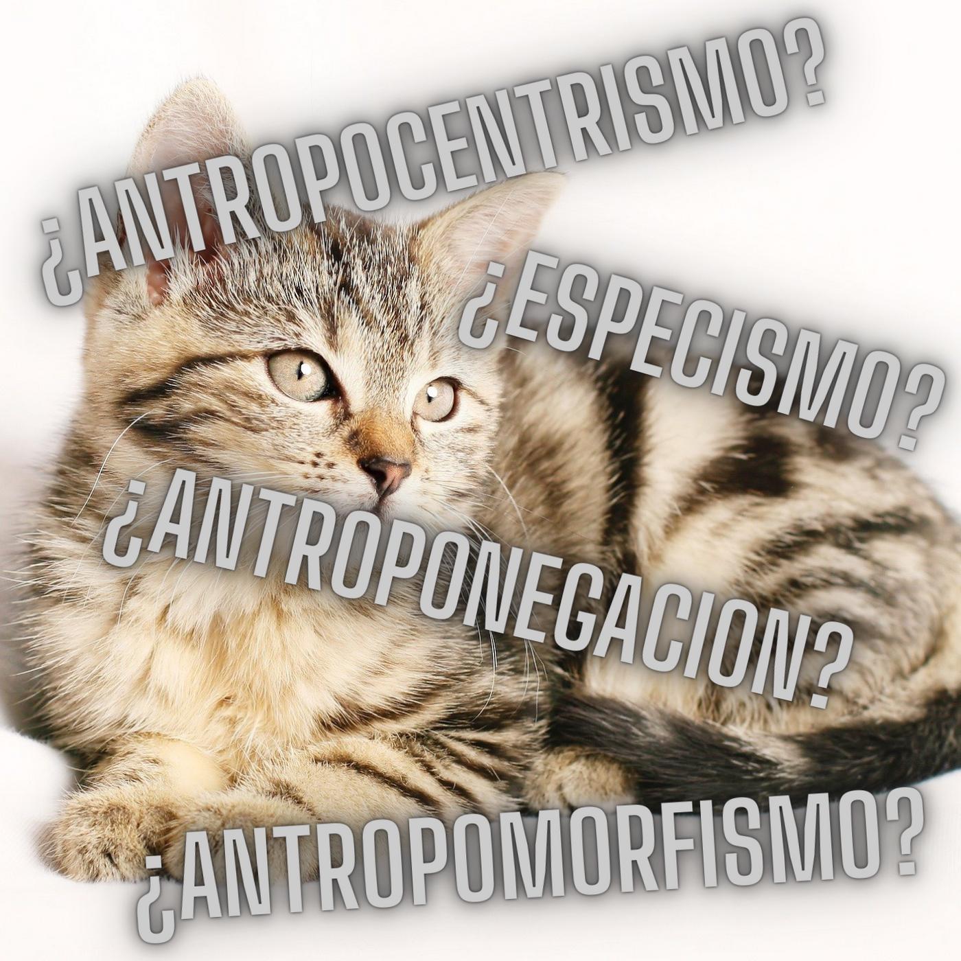 Ep.26 Especismo-Antropocentrismo- Antropomorfismo- Antroponegacion- Definiciones Parte 2