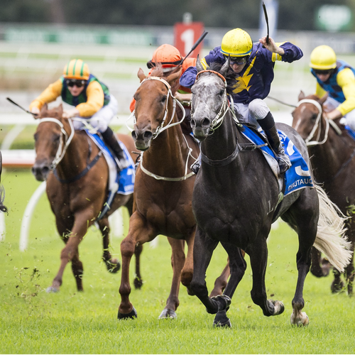 Racing NSW Presents 'In The Irons'