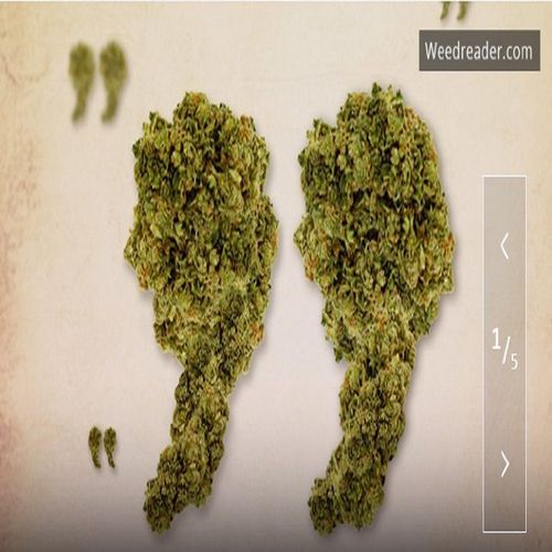 Where to buy weed – know the best suppliers!